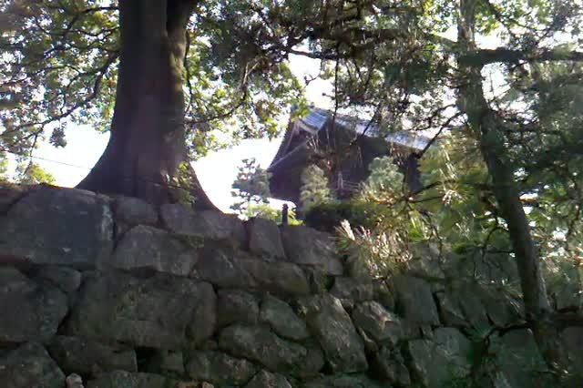 Cicadas at Kurodani. August 13.