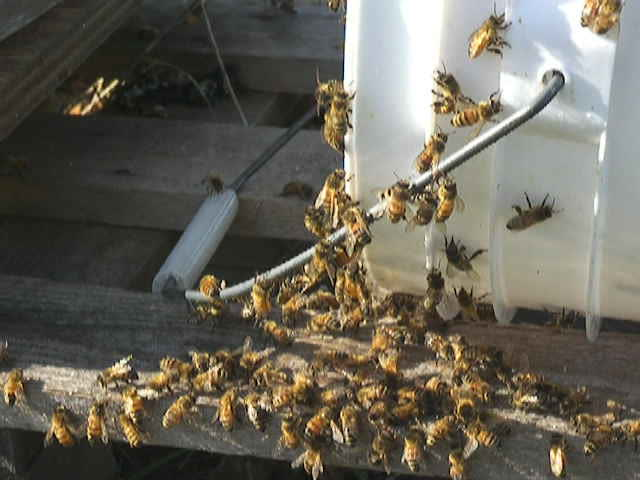 Spring Feeding the Honey Bees