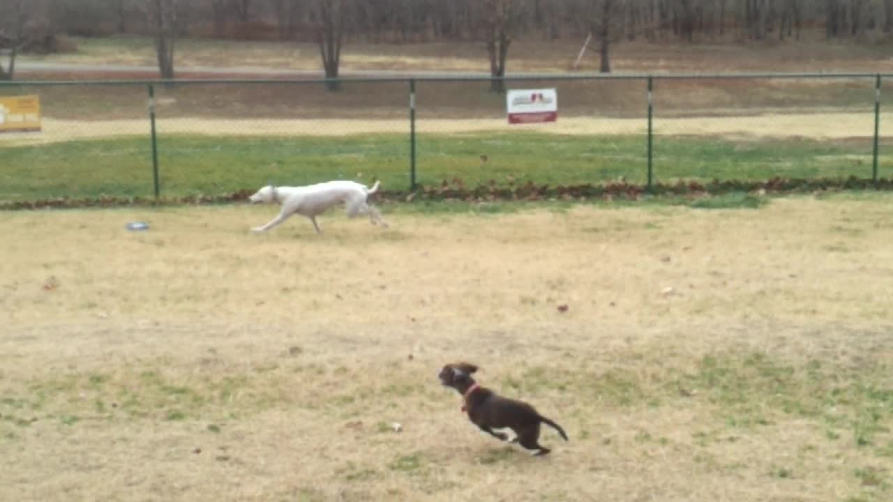 Planet Greyhound boys making friends at dog park