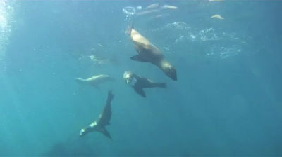 Diving With Seals, Anacapa Island, California