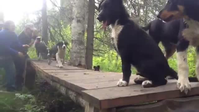 Puppy cam (1)