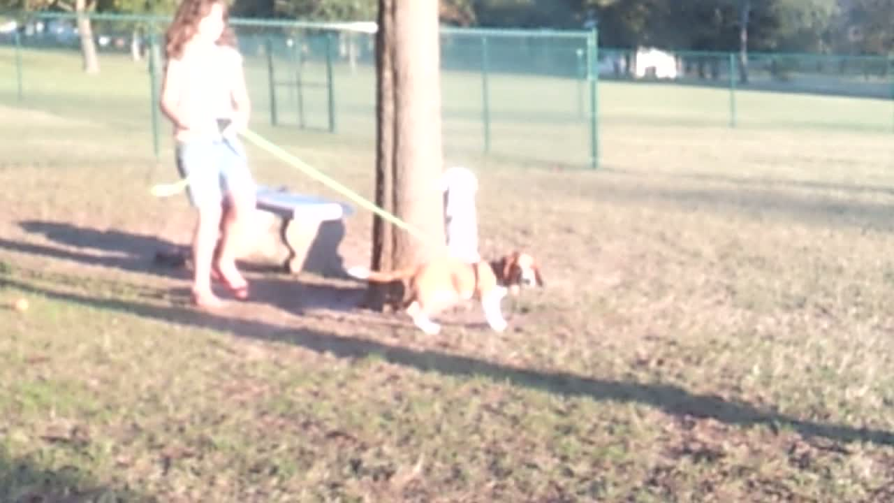Turning on the speed at the dog park!