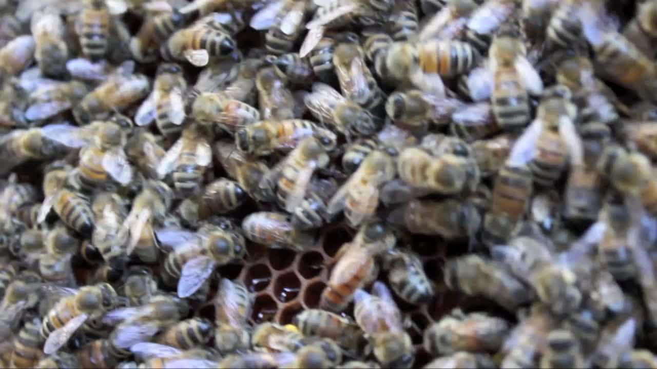 Last days of our summer bees