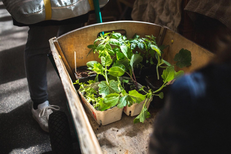 viertelvor_pflanzenmarkt-2