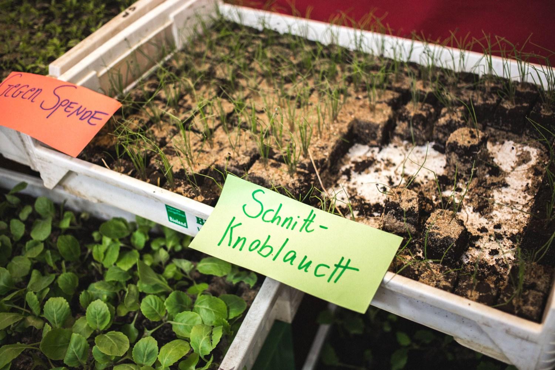 viertelvor_pflanzenmarkt-5