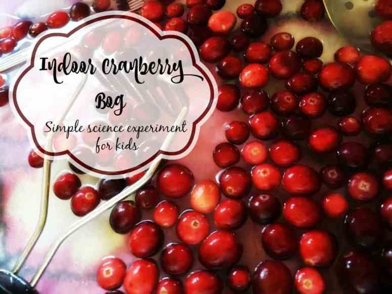 Make an indoor cranberry bog for some simple science and sensory play with kids!