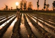 Climate Change Blamed for Pakistan's Cotton Crop Failure