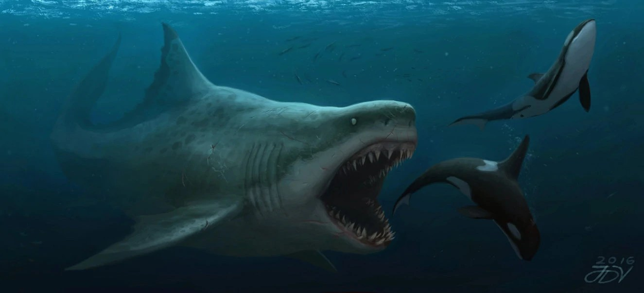 Most Beautiful Wallpapers Of Animals Megalodon Monster Wiki Fandom Powered By Wikia