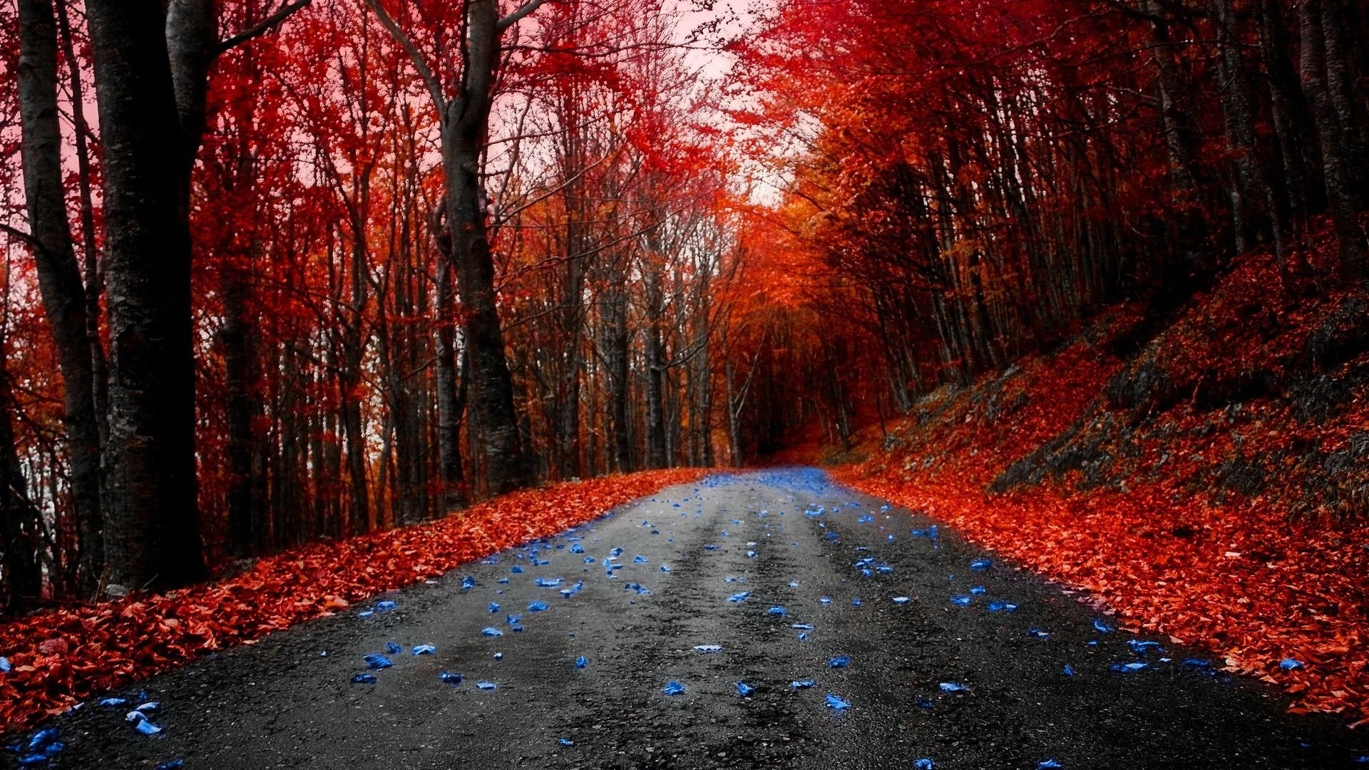 Full Screen Desktop Fall Leaves Wallpaper Image Forests Maple Leaves Forest Autumn Road Red Blue
