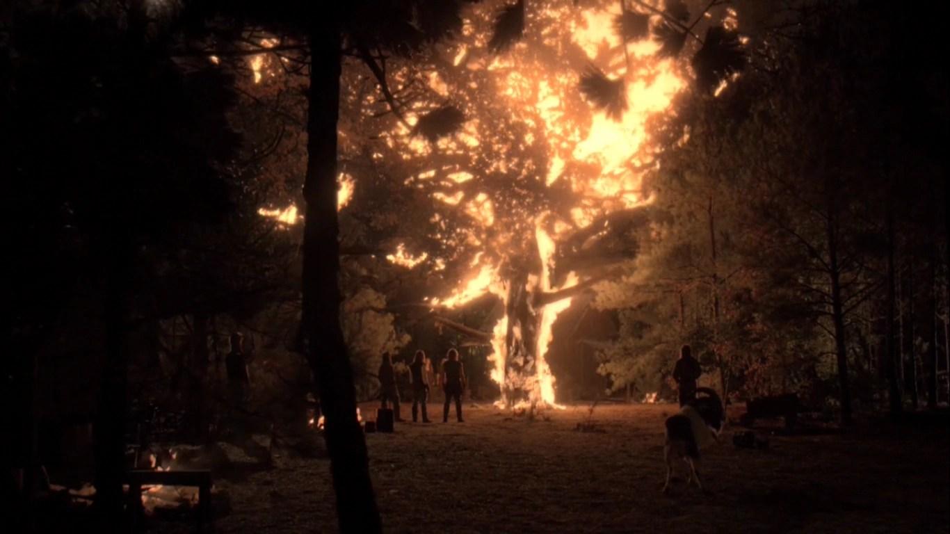 Mystic Falls Wallpaper White Oak Tree The Vampire Diaries Wiki Fandom Powered