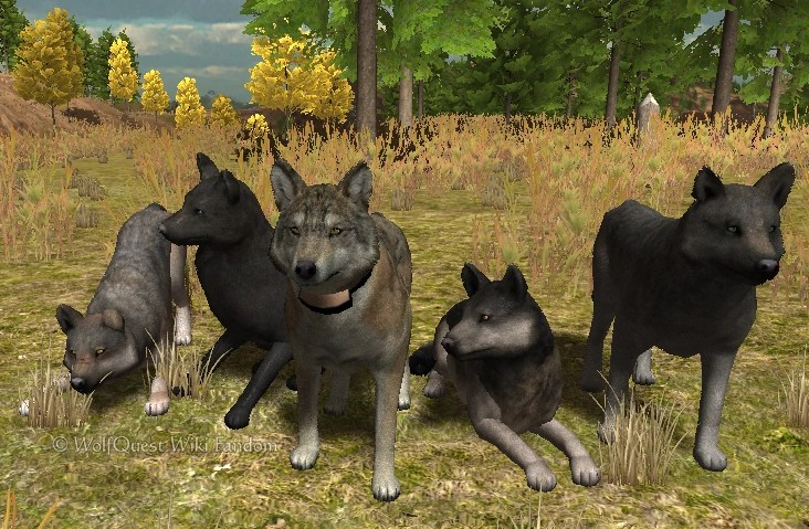 Image Multiplayer Pack Png WolfQuest Wiki Fandom Powered By