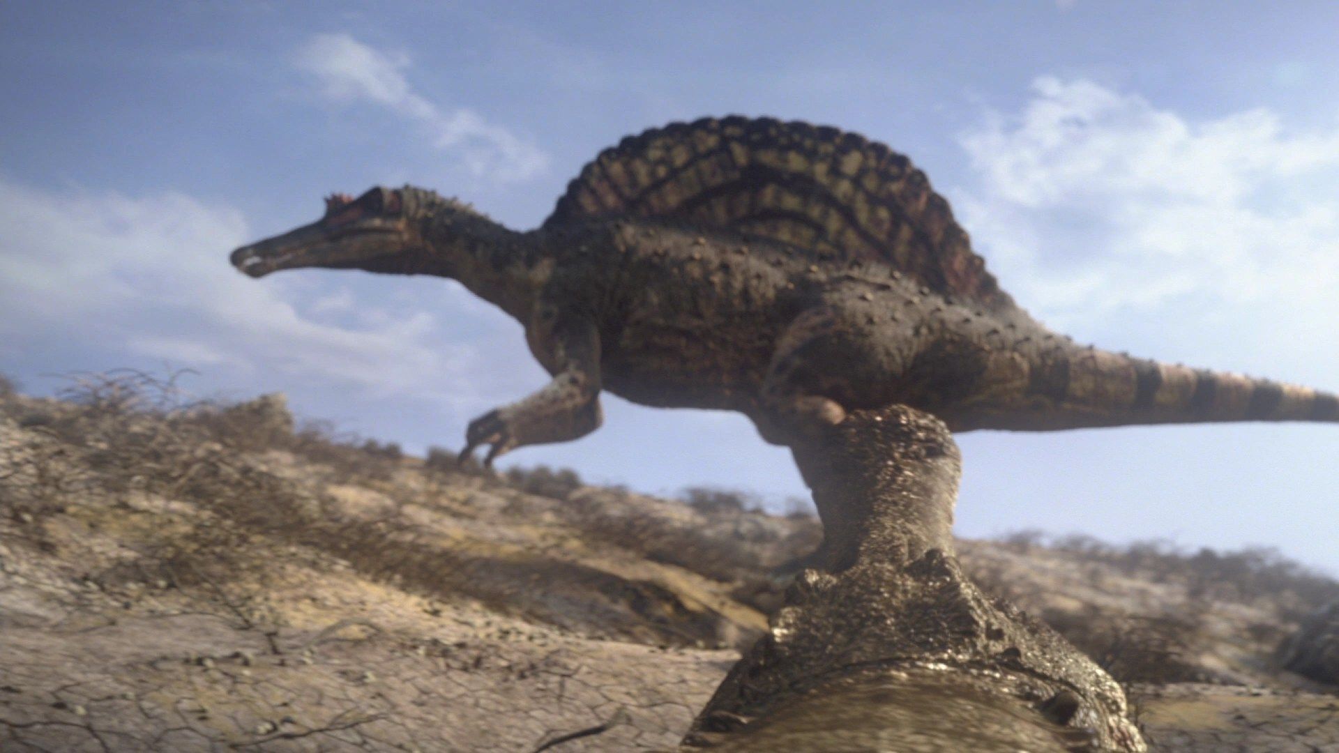 Walking With Dinosaurs 3d Wallpaper Sarcosuchus Planet Dinosaur Wiki Fandom Powered By Wikia