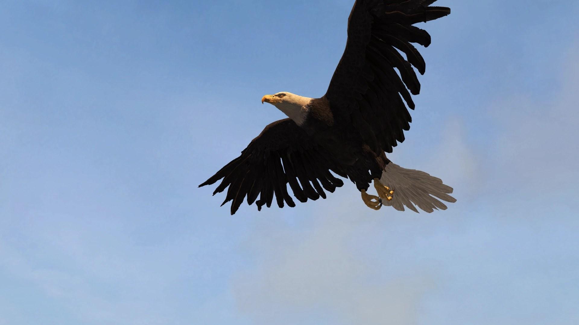 Fall Bird Wallpaper Eagles Assassin S Creed Wiki Fandom Powered By Wikia