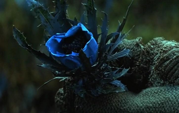 Only Black Wallpaper Bhutan Blue Flowers Dark Knight Wiki Fandom Powered By