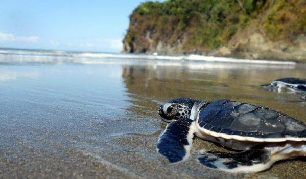 reserva playa tortuga turtle
