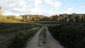 20150331_181457 (Tuesday the 31st of March – Yellow Bog Creek to Bradley's Hut)