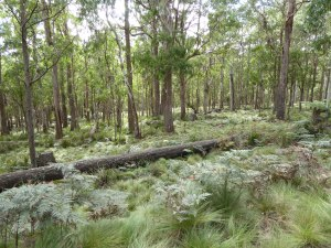 P1010199 (Wednesday the 13th of May 2015 – Thunderbolts way to New Country Swamp)