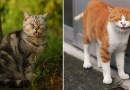 Японский фотограф снимает многоликих бездомных кошек Токио.