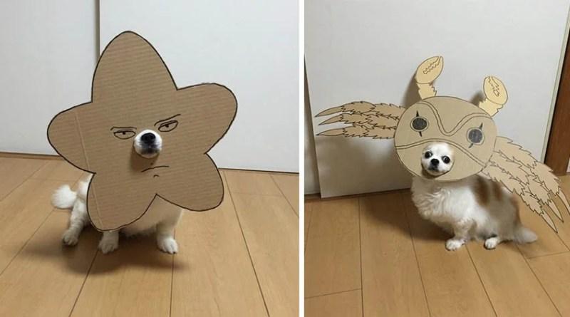 Японка создает веселые наряды из картона для своей собаки.