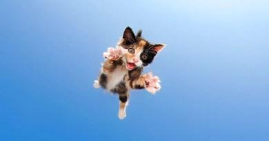 Очаровательные котята фотографа Сета Кастила.