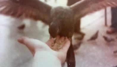 London bird 1978