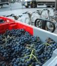 les-vignerons-parisiens-1