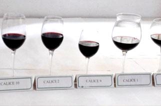 Università di Pisa: ecco il miglior calice da degustazione per il Vino Rosso
