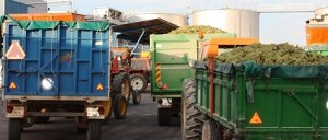 Largas colas de tractores en la provincia de Ciudad Real para descargar la uva