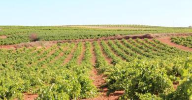 Viñedo Castilla la Mancha