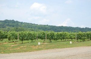 Alba Vineyards, Milford, New Jersey / Photo: Marguerite T. Barrett