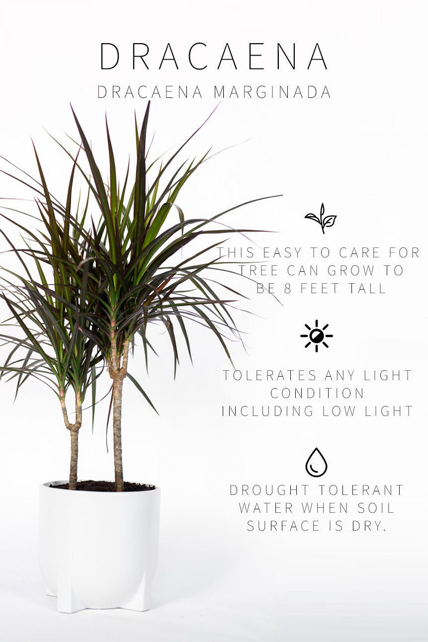 Indoor Plants For Low Light Master List Of Low Light Indoor Plants Vintage Revivals