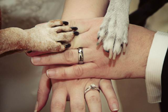 Pets at weddings - photo opportunities via National Vintage wedding fair blog