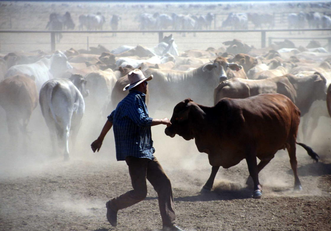 Mustering Jobs Australia An Experience Downunder Working On A Cattle Station