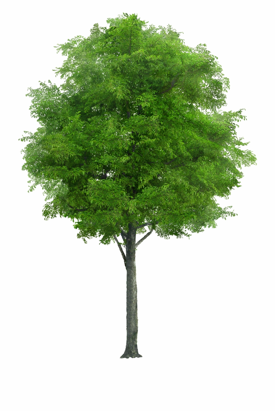 Tree Png Image Tree Plan Png Tree Render Tree Psd Tree Png Transparent Png Download 367058 Vippng