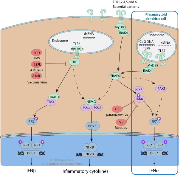 viral modulation of Toll like receptors ~ ViralZone page