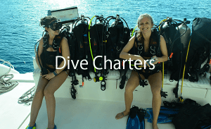 dive-charters
