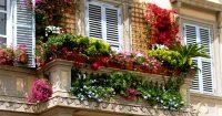 Tips for a Beautiful Balcony Garden  Virily