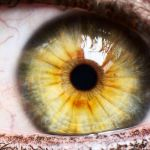 ¿Se puede prevenir el glaucoma