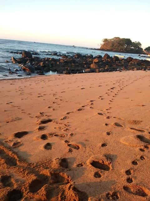 playa los cobanos