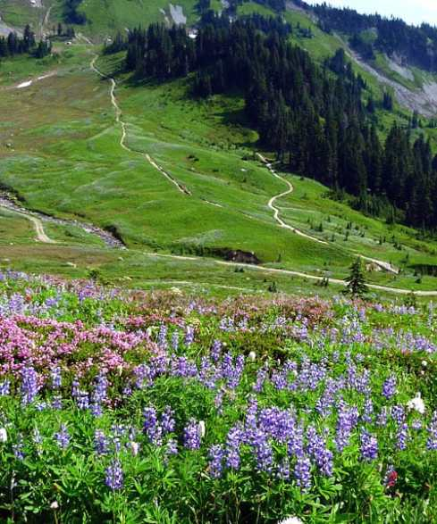 The-flowers-from-Alta-Vista