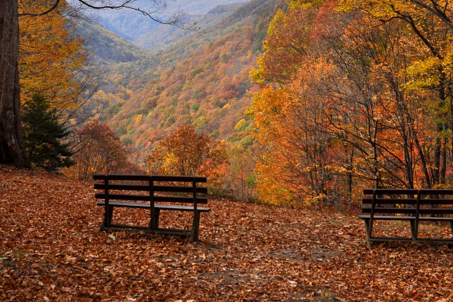 National Geographic Wallpaper Fall Get To Know The Trees That Make Up Southern West Virginia