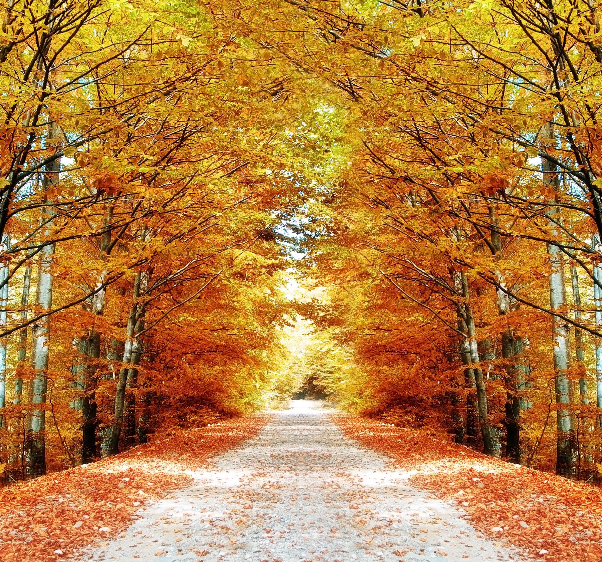 Fall Harvest Wallpaper Images Outono No Canad 225 Belezas E O Turismo Na Linda Esta 231 227 O