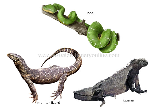 Different Types Of Kitchen Islands Animal Kingdom :: Reptiles :: Examples Of Reptiles [3