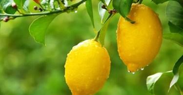 Citron rakovina