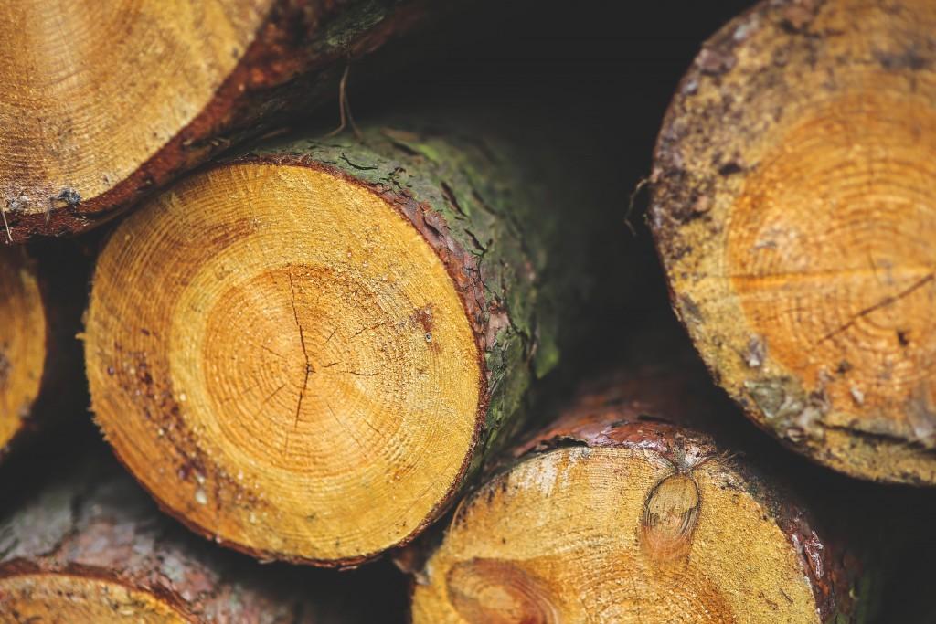 Fall Wooden Wallpaper Tipos Y Calidades De Madera En Construcci 243 N De Viviendas
