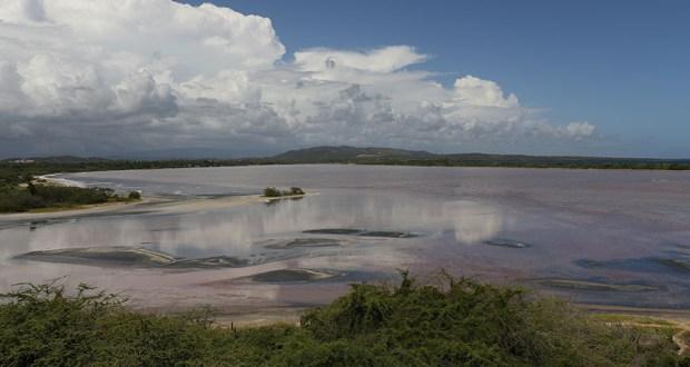 La alta concentración de bacterias halófilas tornan el agua rosa en la parte suroeste de Cabo Rojo. (Voces del Sur)