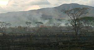 El fuego consumió 60 cuerdas de terreno en el barrio Coco de Salinas. (Facebook / Cuerpo de Bomberos de Puerto Rico)