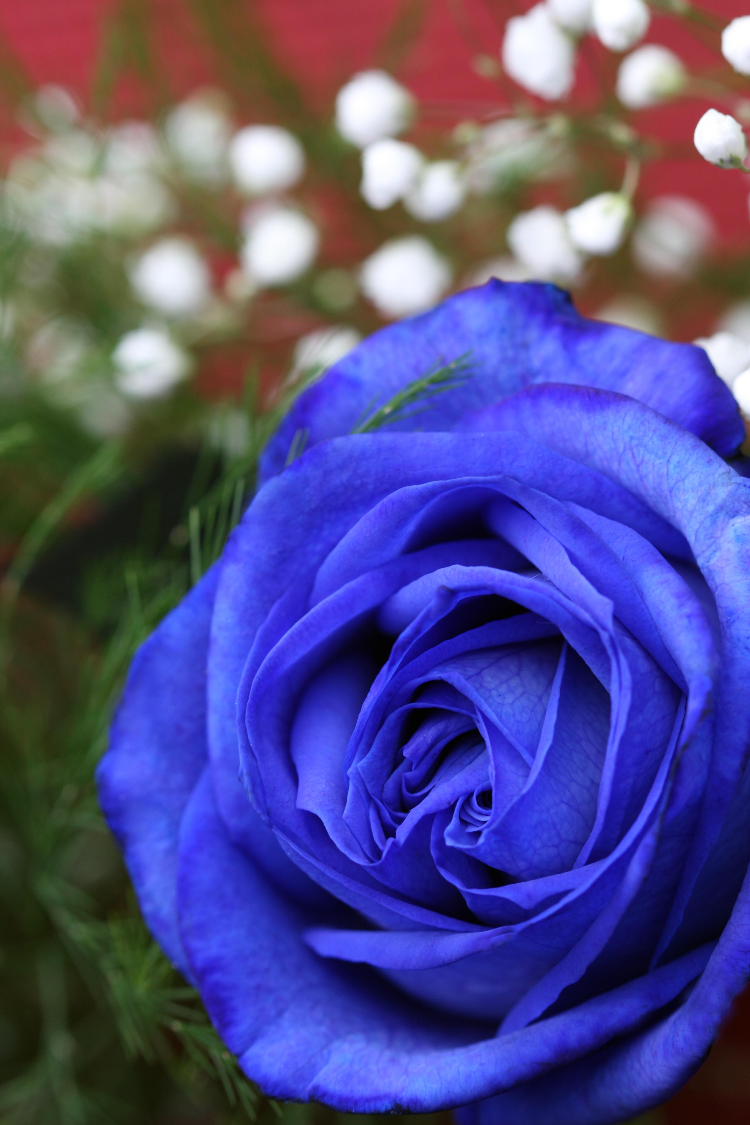 cv en ligne bleu et rose