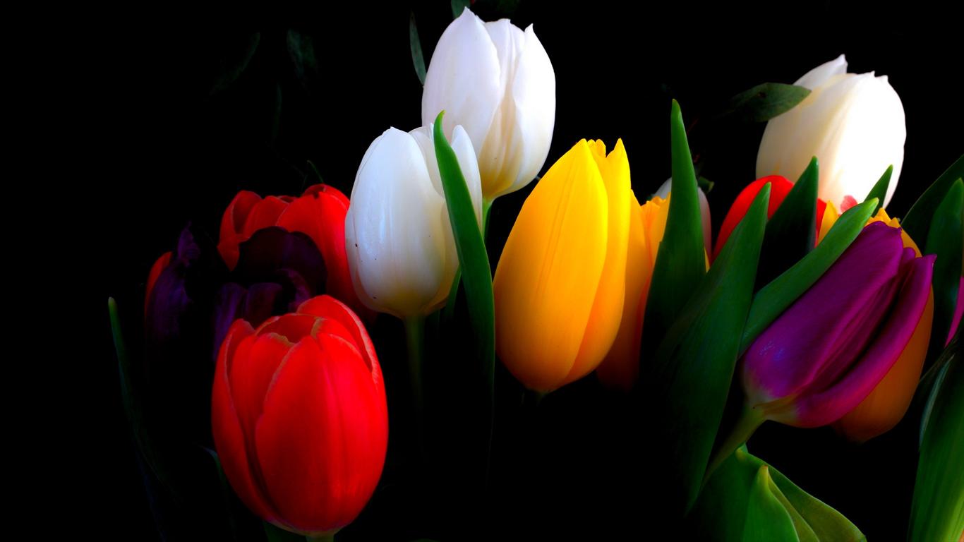 Beautiful Heart Touching Quotes Wallpapers Beautiful Tulips Wallpapers 1366x768 Volganga