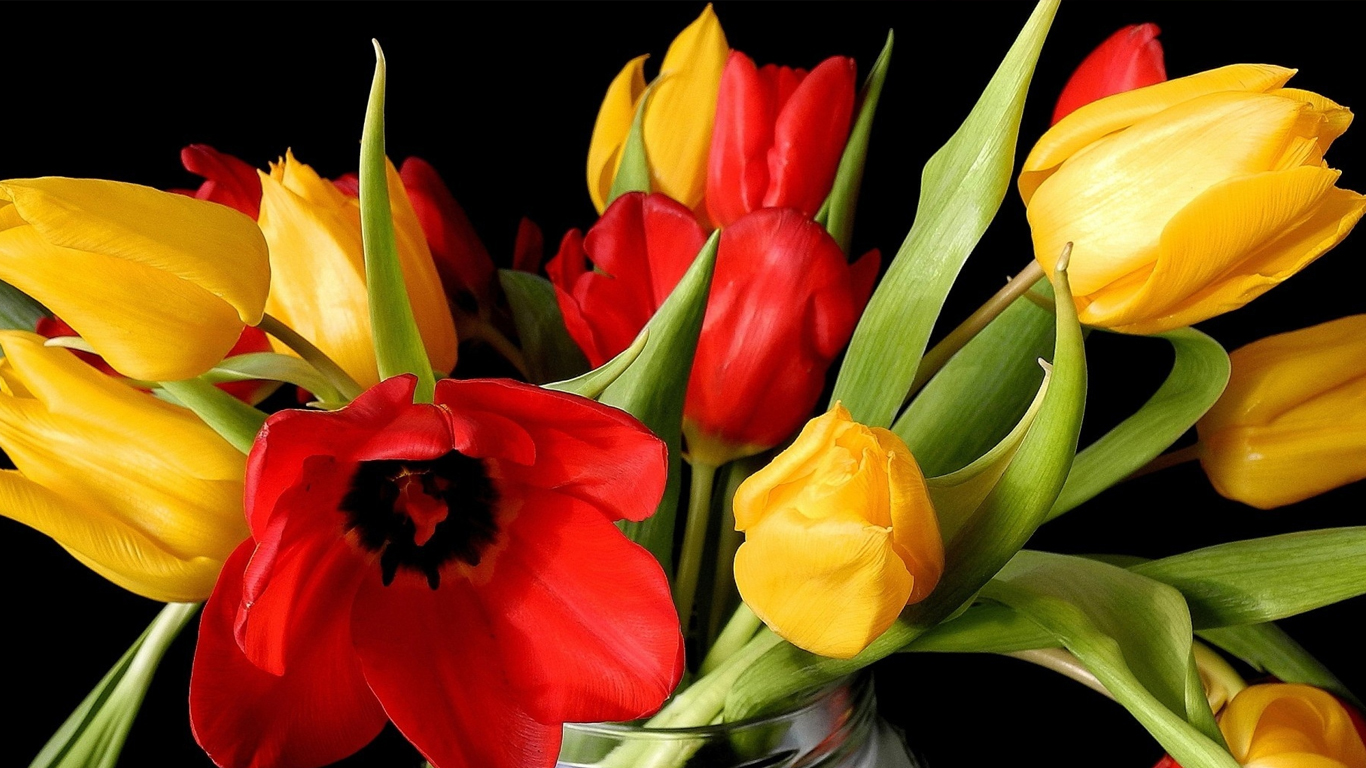 Simple Quotes Hd Wallpapers Beautiful Tulips Wallpapers 1366x768 Volganga